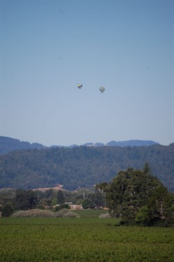 Hot Air Balloons over Hafner Vineyard in Alexander Valley
