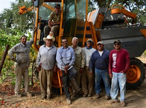 Hafner Vineyard Harvest Team on the First Day of Picking.