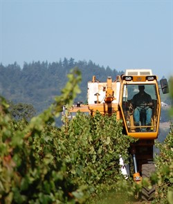 Careful driving promises a productive grape Harvest at Hafner Vineyard
