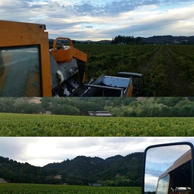 Vineyard manager David shares some images from harvesting.