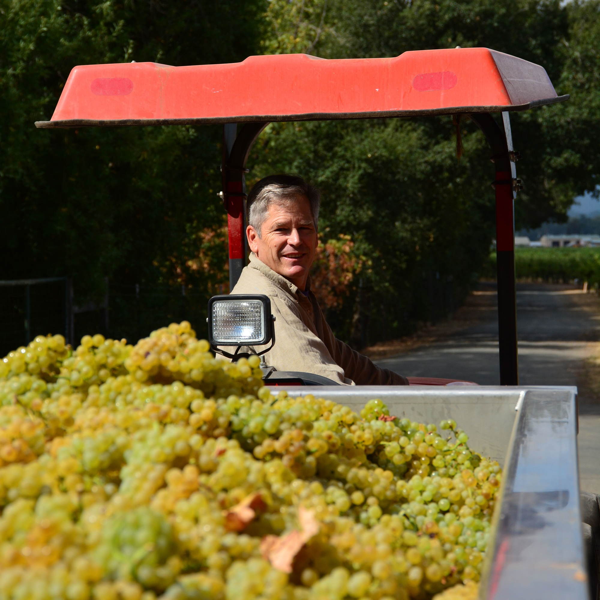 Parke Hafner during Chardonnay Harvest.
