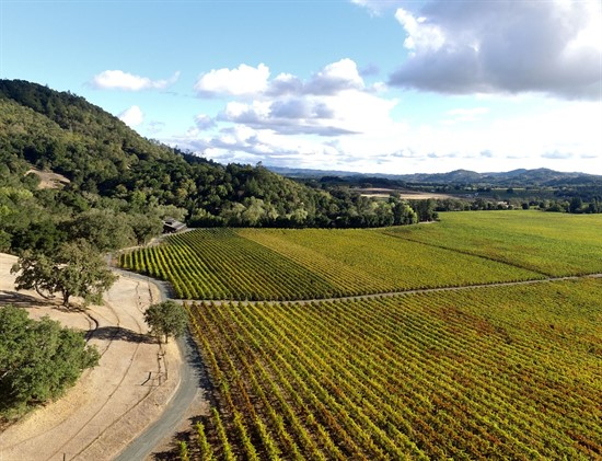 Aerial photography of the vineyard at Hafner