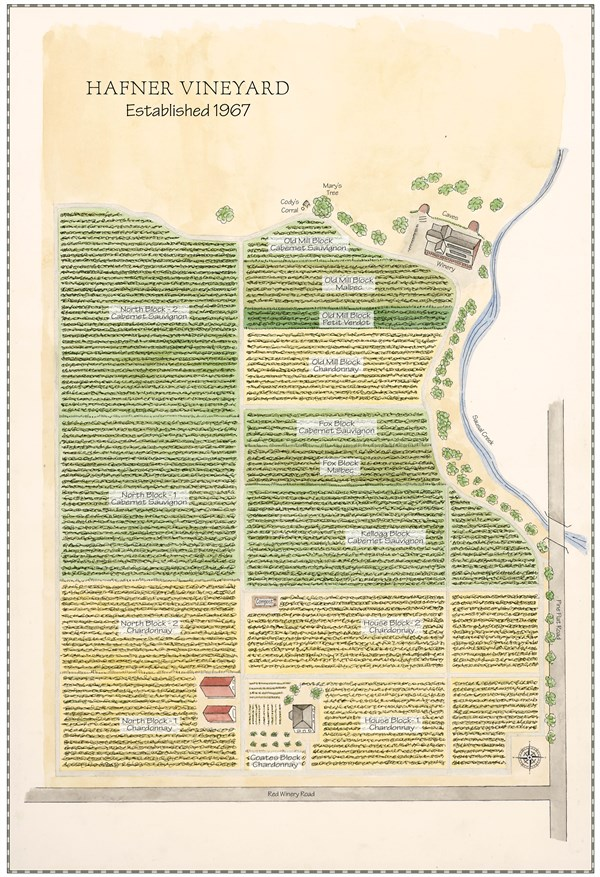 Vineyard Map Watercolor