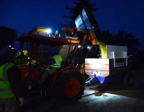 Night harvesting at Hafner Vineyard