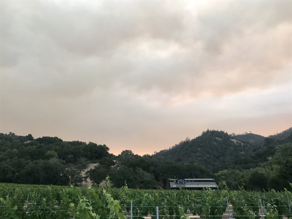 Hafner Vineyard 9/28/20